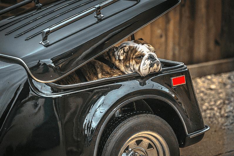 Nobody stays home, pet hauler motorcycle trailer