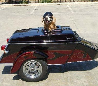 Pet hauler motorcycle trailer