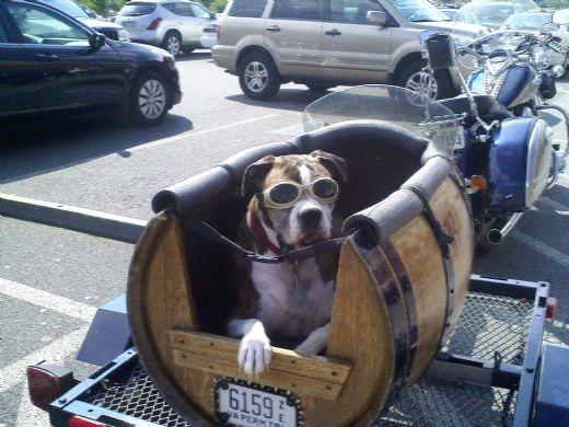 pet hauler motorcycle trailer