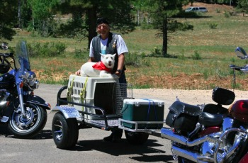pet hauling with a motorcycle trailer